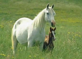 Attività - Cavalli